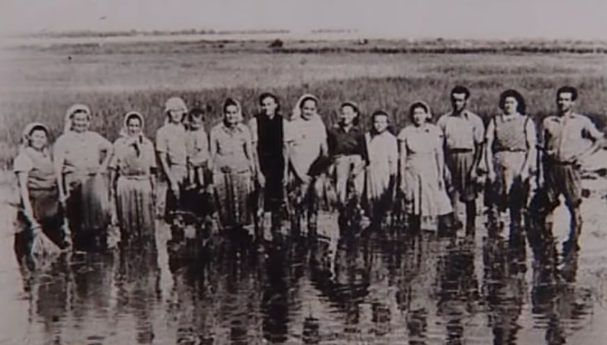 http://www.zlocininadsrbima.com/SLIKE/1946-1960/Baraganska-Golgota11.JPG